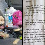 หนุ่มช่วยสุนัขที่กำลังวิ่งบนถนนด้วยความกลัว ก่อนจะเจอโน๊ตที่ทำให้ใจแทบแตกสลาย