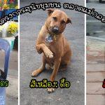 """""""โครงการสุนัขชุมชน ตลาดแม่กลอง"""" จัดระเบียบสุนัขจรจัดโดยใส่ปลอกคอสีบอกนิสัย"""