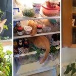 """""""Oliver"""" แมวประหลาด ชอบพาตัวเองไปอยู่ในที่ที่ไม่ควรอยู่ จนถูกทาสถ่ายรูปประจาน"""