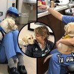 """""""สุนัขบริการ"""" มาโรงพยาบาลทุกวันเพื่อให้กำลังใจหมอ-พยาบาลที่กำลังสู้กับโรคระบาด"""