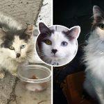 """คู่รักช่วย """"แมวจรตาสองสี"""" สภาพมอมแมม และทำให้ชีวิตของมันเปลี่ยนไปตลอดกาล"""