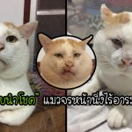 """เปิดวาร์ป """"เฮียนำโชค"""" อดีตแมวจรหน้านิ่งสุดอินดี้ ไม่ว่าจะอารมณ์ไหนก็หน้าเดียวตลอด"""