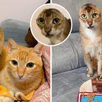 """""""แมวจร"""" ถูกตัดหูเพื่อรักษาเนื้องอก กลายเป็น """"แมวไร้หู"""" และได้เริ่มต้นชีวิตใหม่อีกครั้ง"""