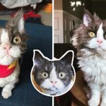 """""""ลูกแมวขนหยิก"""" เกิดมาพร้อมภาวะหายาก แต่น้องแฮปปี้เมื่อได้พบกับครอบครัวในฝัน"""
