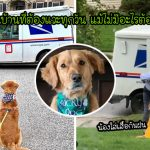 น้องหมารักบุรุษไปรษณีย์มาก ออกมารอทักทายเขาทุกวัน ไม่เว้นแม้แต่วันฝนตก