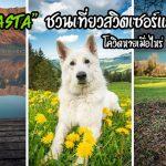 """""""สุนัขเยอรมัน เชพเพิร์ดสีขาว"""" ชวนเที่ยวสวิตเซอร์แลนด์ สถานที่อันงดงามที่คุณไม่ควรพลาด"""