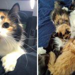 """หญิงสาวเซอร์ไพรส์เมื่อพบว่า """"แมวจร"""" ที่เธอช่วยเอาไว้ กำลังตั้งท้องลูกน้อยถึง 3 ตัว"""