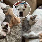 'ตูบหูหนวก' รับเป็นพี่เลี้ยงให้ 'ลูกแมวกำพร้า' ดูแลจนพวกมันเติบโตขึ้นอย่างหล่อเหลา