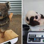 """ผู้ดูแลเผย """"วิธีการชั่งน้ำหนักสัตว์แต่ละชนิด"""" ทั้งน่ารักและบ่งบอกถึงความเอาใจใส่อย่างแท้จริง"""
