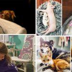 มิตรภาพแสนอบอุ่นระหว่างสัตว์-สัตว์ และสัตว์-มนุษย์ ที่เติบโตมาด้วยกันอย่างมีคุณภาพ