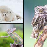 19 ภาพสัตว์ป่าในโมเมนต์หายาก เผยให้เห็นความงดงามที่ซ่อนอยู่ในโลกของเรา