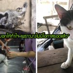 แมวจรบาดเจ็บหนักจนหมอบอกไม่รอด แต่สาวทาสแมวไม่ถอดใจ ช่วยจนมันเดินได้อีกครั้ง
