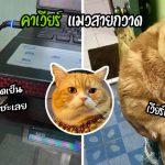 'คาเวียร์' แมวสายกวาด กวาดทุกอย่างหล่นลงพื้น แต่ขี้อ้อนหนักมาก ทาสเลยโกรธไม่ลง