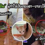 """""""ส้มสลิด"""" ลูกแมวผู้ทำให้คุณตาเย็นชาและคุณยายปากแข็ง เปลี่ยนมาใช้เสียง 2 ใน 4 วัน"""