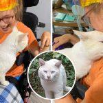 """""""แมวจร"""" กระโดดขึ้นวีลแชร์ของเด็กหญิงพิการ กอดเธอด้วยความรักและเลือกเธอเป็นทาส"""