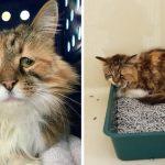 """""""แมวจรหน้าเศร้า"""" มีนิสัยขี้อาย กลายเป็นแมวขี้อ้อนเมื่อได้สัมผัสความรักจากมนุษย์"""
