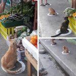 ชาวเน็ตชื่นชมแมวจรในฟิลิปปินส์ที่อยู่ในวงกลม ซึ่งเป็นสัญลักษณ์การเว้นระยะห่างทางสังคม