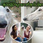 """พบกับ """"Eris"""" สุนัขบอร์ซอยผู้มีจมูกยาวที่สุดในโลก มาพร้อมความสดใสจนมีแฟนคลับเพียบ"""