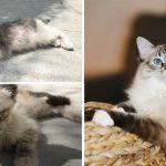"""""""ลูกแมวจร"""" ถูกทิ้งให้ตายเพียงลำพัง ถูกชุบเลี้ยงจากคนใจดี จนเปลี่ยนไปอย่างน่าทึ่ง"""