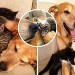 'ตูบแสนดี' มอบความรักให้ลูกแมวทุกตัวที่เจ้าของพาเข้าบ้าน ดูแลจนกว่าพวกมันจะหาบ้านได้