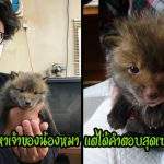 หนุ่มญี่ปุ่นประกาศหาเจ้าของลูกหมาที่ถูกพบข้างถนน แต่กลับพบว่ามันไม่ใช่ลูกหมา…