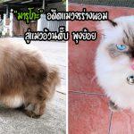 """""""มารุโกะ"""" อดีตลูกแมวขี้กลัว ร่างผอม ได้รับการช่วยเหลือ จนกลายเป็นเหมียวอ้วน ชีวิตดี๊ดี"""