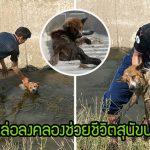 """""""สุนัขบาดเจ็บ"""" นอนรอความตายในคลอง โชคดีชายหนุ่มผ่านมาเห็น จึงช่วยมันไว้ได้ทันเวลา"""