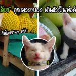 """""""น้องเดียว"""" แมวตาบอด ถูกชุบเลี้ยงโดยลุง-ป้าใจดี มันจึงตอบแทนด้วยการช่วยขายผลไม้"""
