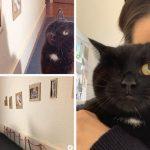 """คู่รักทำหอศิลป์ส่วนตัวให้ """"แมวตาเดียว"""" หลังมันบาดเจ็บและไม่ได้ออกบ้านนานนับเดือน"""