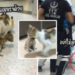 """""""แม่แมวจรจัด"""" คิดว่าลูกป่วย จึงคาบลูกเข้ามาในโรงพยาบาลคน เพื่อขอความช่วยเหลือ"""