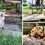 """""""น้องหมาถูกขังในกรง"""" ส่งยิ้มให้ทุกคนที่เดินผ่าน หวังจะได้รับการปลดปล่อยเป็นอิสระ"""