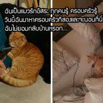 """""""แมวส้ม"""" เดินมาหาเพื่อนบ้านทุกวัน บางวันก็ค้างคืน และเลือกพวกเขาเป็นครอบครัวที่สอง"""