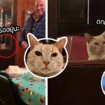 คู่รักบังเอิญเจอแมวจรเข้ามาอ้อนระหว่างไปดินเนอร์ ขากลับพวกเขาจึงอุ้มมันกลับบ้านด้วย