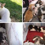 แม่แมวเดินกะเผลกไปหาชายแปลกหน้า และพาเขาไปช่วยลูกๆ ของมันที่อยู่ในพุ่มไม้