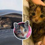 ลูกแมวร้องไห้ด้วยความหวาดกลัวบนล้อรถ ผ่อนคลายลงเมื่อได้ผัสผัสอ้อมกอดของมนุษย์