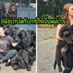 """หญิงสาวพา """"สุนัขพันธุ์ยักษ์ 9 ตัว"""" ไปเยี่ยมผู้ป่วยในโรงพยาบาล เพื่อมอบความสุขให้"""