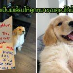 เด็กชายเขียนจดหมายไปหาเพื่อนบ้าน เพื่อขอเป็นพี่เลี้ยงให้ลูกหมาที่พวกเขาเพิ่งรับเลี้ยง