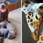 20 ภาพครอบครัวสัตว์ เผยให้เห็นความรัก ความห่วงใยที่พ่อแม่มีต่อลูกจนคุณเองก็สัมผัสได้
