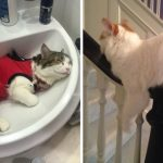 """17 ภาพเจ้านายขนปุยที่ยืนยันว่า """"แมวสามารถนอนได้ทุกที่"""" ยกเว้นที่นอนแมวจริงๆ"""