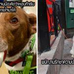 รวมภาพสุนัขแสนรู้ผู้ทำหน้าที่ได้อย่างดีเยี่ยม จนได้รางวัลพนักงานดีเด่นประจำเดือน