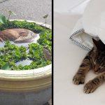 16 สัตว์เลี้ยงผู้เข้าถึงความสุขที่แท้จริง ด้วยการปล่อยกาย ปล่อยใจไปดับการนอนแล้วก็นอน