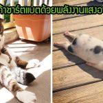 20 ภาพสัตว์เลี้ยงนอนอาบแดดสุดฟิน ราวกับกำลังชาร์ตแบตโดยใช้พลังงานแสงอาทิตย์