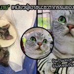 แมวแรกเกิดมีโรครุมเร้าจนหมอบอกจะอายุสั้น แต่น้องไม่ยอมแพ้และสู้จนอยู่มาได้ 2 ปีแล้ว