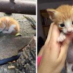 ลูกแมวนอนแน่นิ่งไร้ลมหายใจ รอดมาอย่างปาฏิหาริย์ หลังได้รับการช่วยเหลือโดยเมืองดี