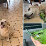สุนัขผู้อ่อนโยนช่วยชีวิตลูกนกที่ตกจากรัง และตั้งใจจะเป็นพี่ชายที่แสนดีให้มันตลอดไป