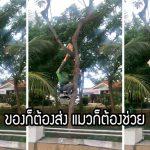 หนุ่มแกร๊ปเห็นแมวจรติดอยู่บนต้นไม้ ไม่รอช้า รีบปีนขึ้นไปช่วยมันลงมาอย่างปลอดภัย