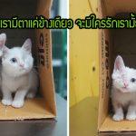 สองพี่น้องแมวจรสูญเสียดวงตาตัวละข้าง แต่ทั้งคู่ก็สู้และหวังจะมีบ้านดีๆ เหมือนแมวทั่วไป