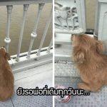 สุนัขผู้ซื่อสัตย์เฝ้ารอให้เจ้าของกลับมาหา หลังจากที่เห็นเขากระโดดสะพานไปต่อหน้าต่อตา…