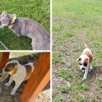 เจ้าเหมียวบอกลาลูกหมาอุปถัมภ์เป็นครั้งสุดท้าย ก่อนที่จะน้องหมาจะย้ายไปอยู่บ้านหลังใหม่