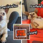 """""""สุนัขสายชิลล์"""" ชอบงีบในเวลางาน จนครอบครัวถอดใจที่จะให้มันเป็นสุนัขเฝ้าบ้าน"""